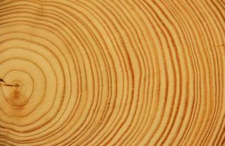 Matières de ville : le bois