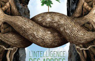 illustration-l-intelligence-des-arbres_1-1517831227.jpg